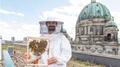 Beekeeper Andreas Bauer at the DomAquarée
